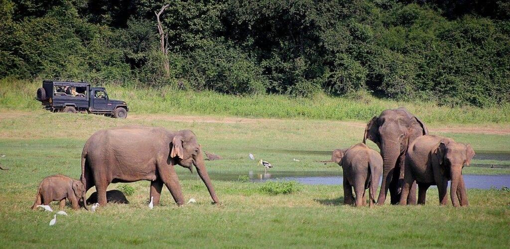 De Beste en Populairste Natuurparken Van Sri Lanka